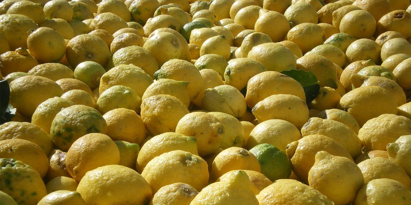 limoni kosher